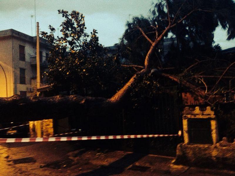 Marano, albero si abbatte sulla strada e sfonda il cancello di una casa