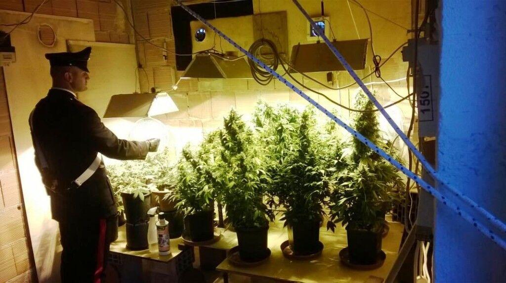 Villaricca, coltivava cannabis in casa: 28enne nei guai. IL NOME