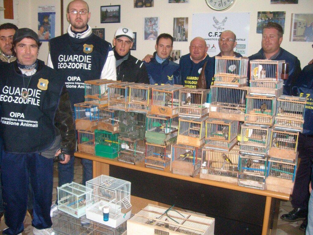 Contrabbando di cardellini, sequestro da 10.000 euro in una casa di Giugliano