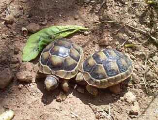 Marito e moglie denunciati. Trasportavano nelle tinozze animali in via d'estinzione