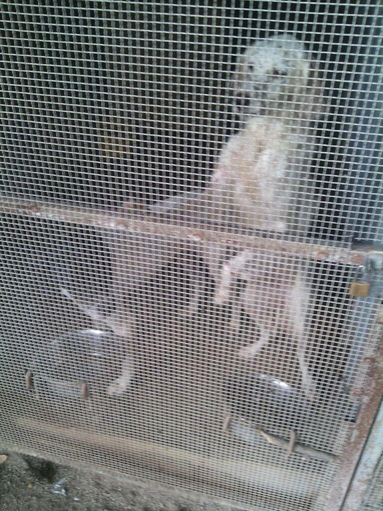 """Operazione """"Masseria Maledetta"""", le guardie zoofile dell'Oipa sequestrano 100 animali"""