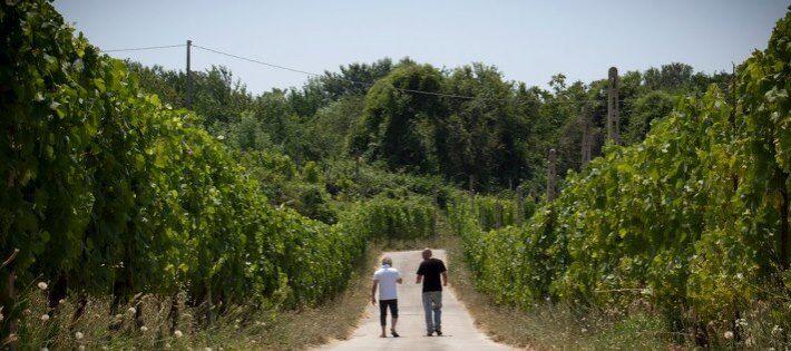 Un vino doc sui terreni confiscati alla camorra