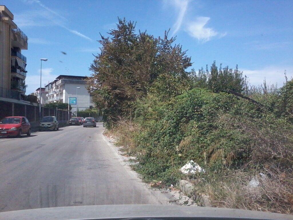 Calvizzano, erbacce e rampicanti invadono il marciapiede di via Adda. La segnalazione dei residenti