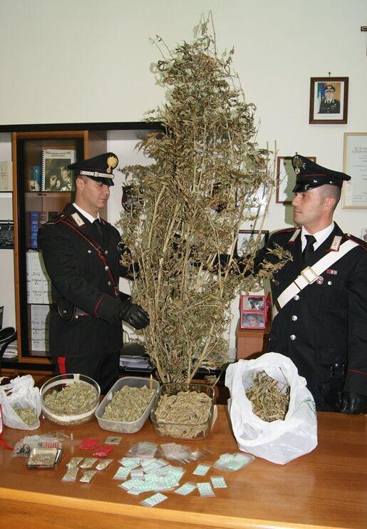 Coltivavano cannabis presso le proprie abitazioni, arrestati due ragazzi giuglianesi