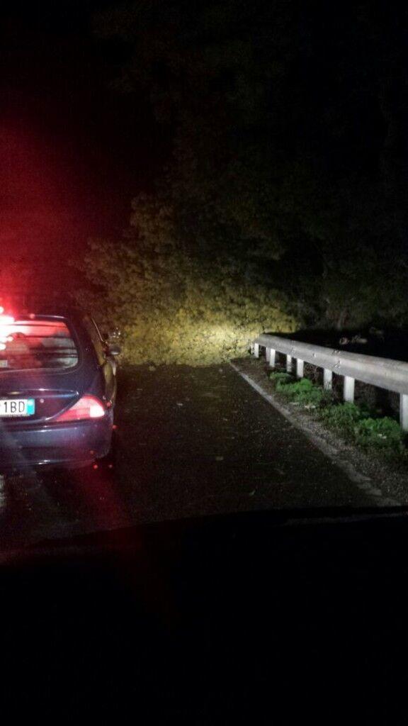 Cade un albero a Varcaturo: tragedia sfiorata