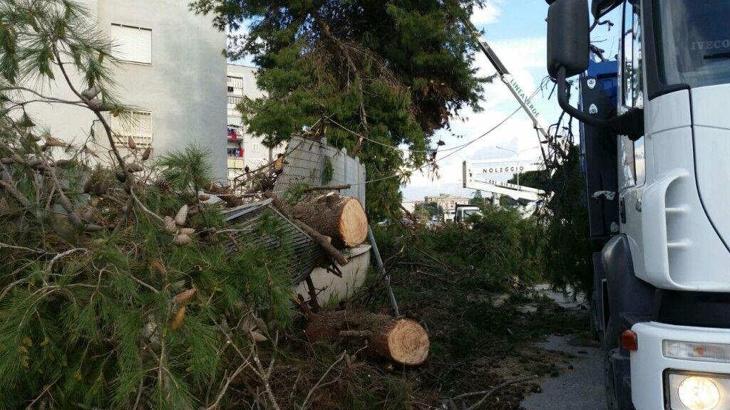 Vento forte, crolla albero in via Pigna: tragedia sfiorata. E' successo vicino alla scuola poco prima dell'uscita degli alunni. VIDEO