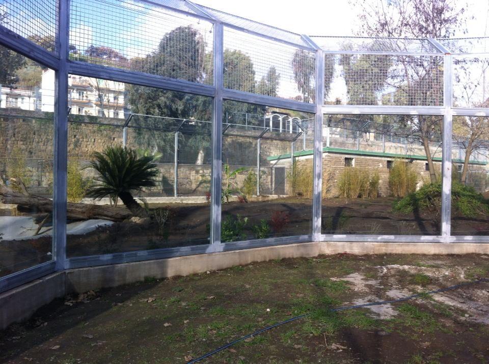 """Le tigri dello zoo di Napoli lasciano le gabbie lager e si trasferiscono nella nuova area """"Savana"""" dopo oltre 70 anni"""