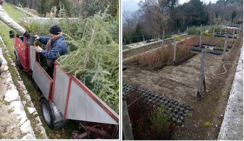 """Mugnano, arrivati 400 alberi. Sarnataro: """"Molti saranno piantati nei giardini delle scuole"""""""
