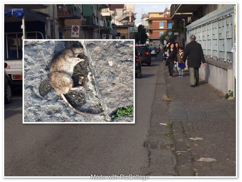 Giugliano: topo morto in via Allende, residenti sul piede di guerra