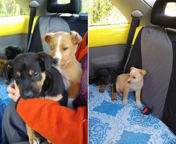 Giugliano, la solidarietà: trova 7 cuccioli abbandonati per strada e li salva