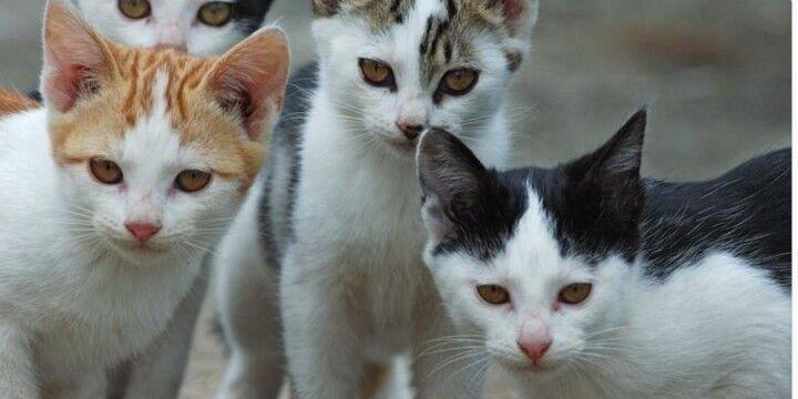 """Napoli, il volantino shock: """"Cibo per gatti avvelenato per liberarci di questi orrendi felini"""""""