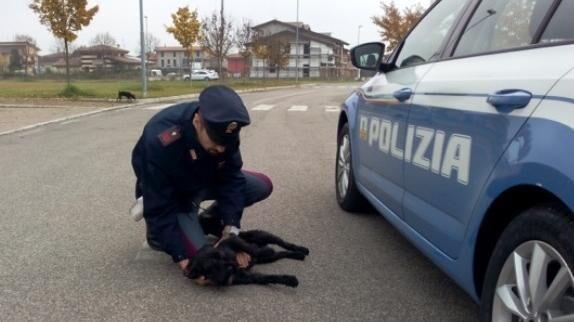 Attenzione, multe da 1600 euro per chi non soccorre un animale. Ecco la novità