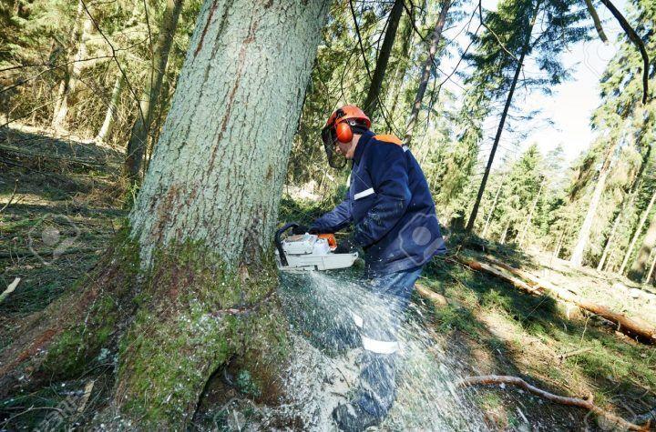 Tragedia in provincia, uomo muore travolto da un albero