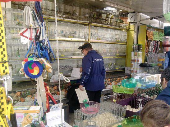 Blitz a Villaricca, scoperto negozio-lager per animali. Due denunciati