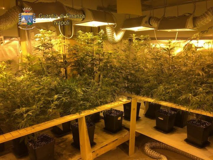 Mega-piantagione di marijuana scoperta a Giugliano, due arresti