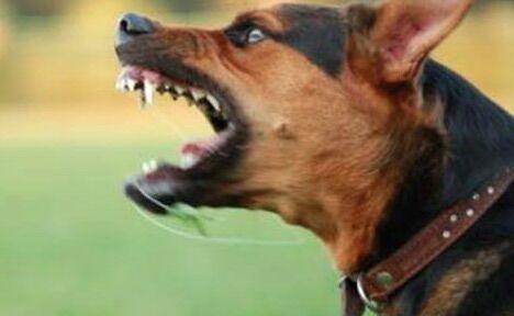 Terrore a Marano, bambina di due anni azzannata da una cane di grossa taglia