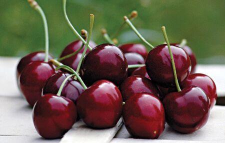 Dieta delle ciliegie, perdi 4 chili in un mese e non te ne accorgi