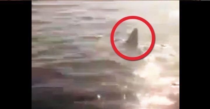 Catturato squalo nel Golfo di Napoli, scatta un nuovo allarme