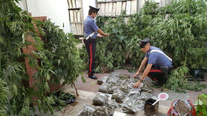 Marano, dosi e piante di marijuana in casa: arrestato
