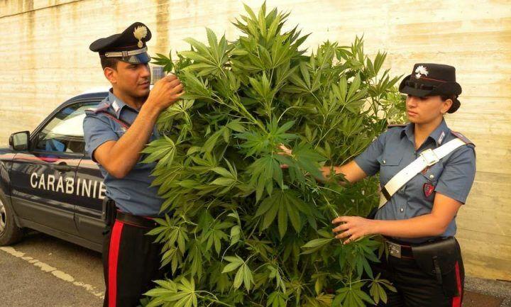Droga nello scantinato e piante di cannabis a casa, arresto a Quarto