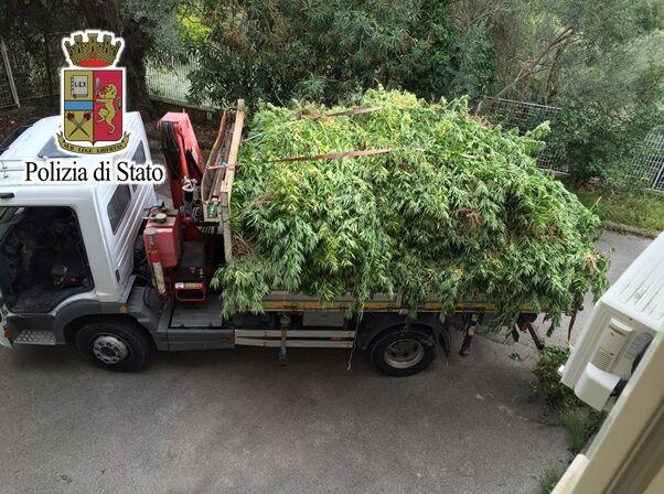 Napoli, enorme pianta di marijuana in casa: arrestato