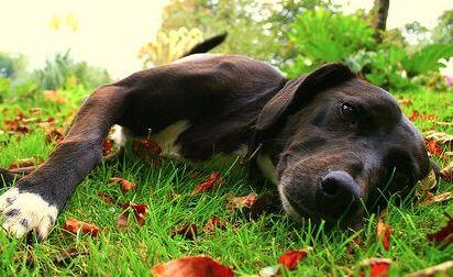 Lasci il cane da solo in giardino? Rischi un guaio