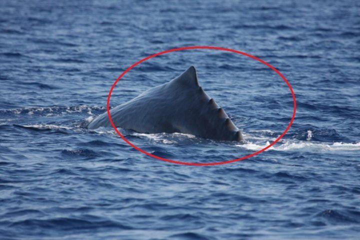 """Golfo di Napoli, spunta un """"mostro"""" dalle acque. Ecco cos'è"""
