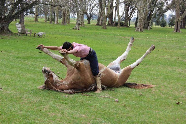Fa sesso con un cavallo e si filma col telefonino, il giudice lo condanna così