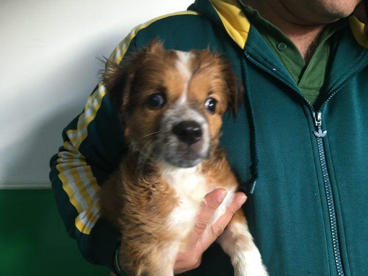 Salvata cagnolina in fin di vita, adesso cerca casa