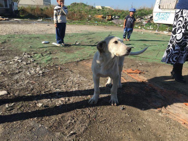 Giugliano, blitz delle guardie zoofile al campo rom