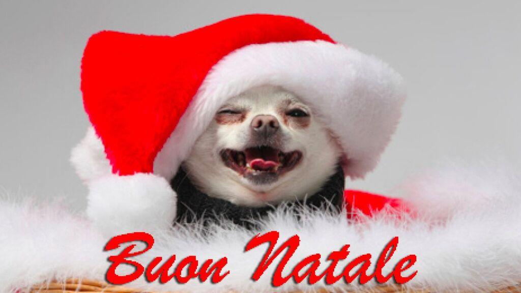 Aforismi Regali Di Natale.Auguri Di Buon Natale Immagini Divertenti E Frasi Spiritose