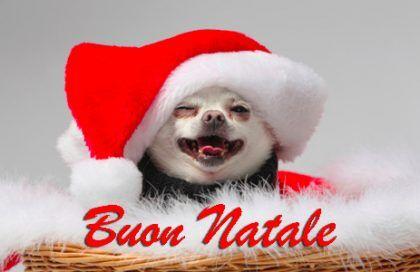 Immagini Natalizie Simpatiche.Auguri Di Buon Natale Immagini Divertenti E Frasi Spiritose