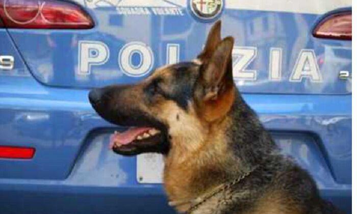 Droga nelle scuole, arrivano i cani poliziotto. Controlli nel Casertano