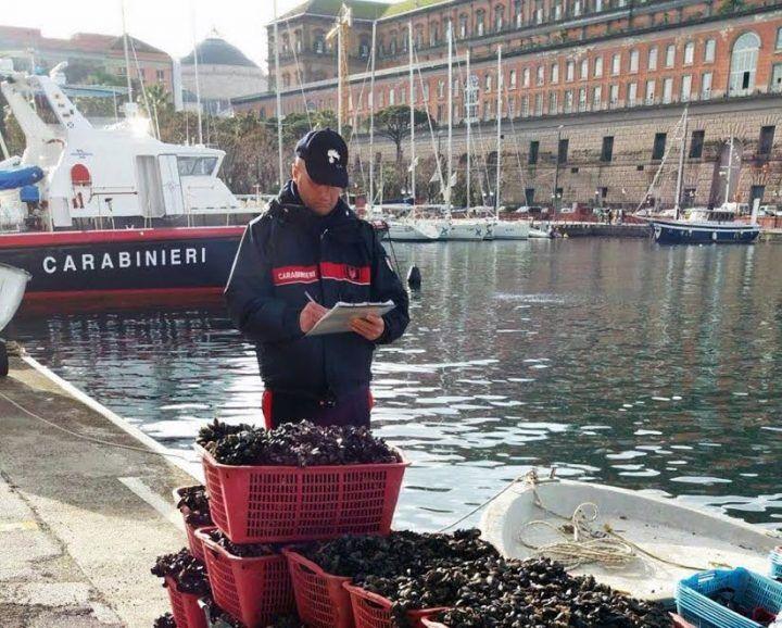 Napoli, vongole e telline fuorilegge. Denunciati 12 venditori