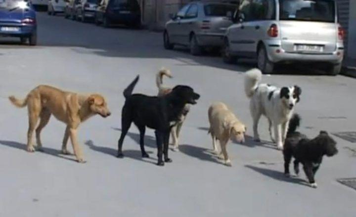Mugnano, al via il nuovo servizio di custodia dei cani randagi