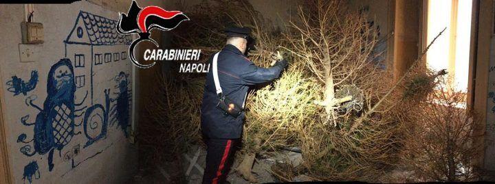 Napoli, ritrovato l'albero di Natale rubato in Galleria: ecco dov'era