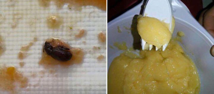 Napoli, insetti nei pasti dei bimbi dell'istituto Minucci
