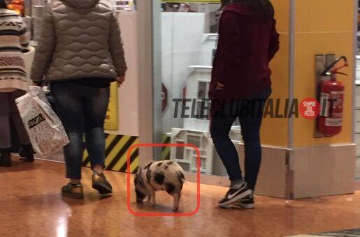 Giugliano, ragazza con maialino all'Auchan. La foto fa il giro del web