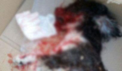 Salerno: uomo massacra di botte il suo cagnolino, incastrato dal video. Arrestato