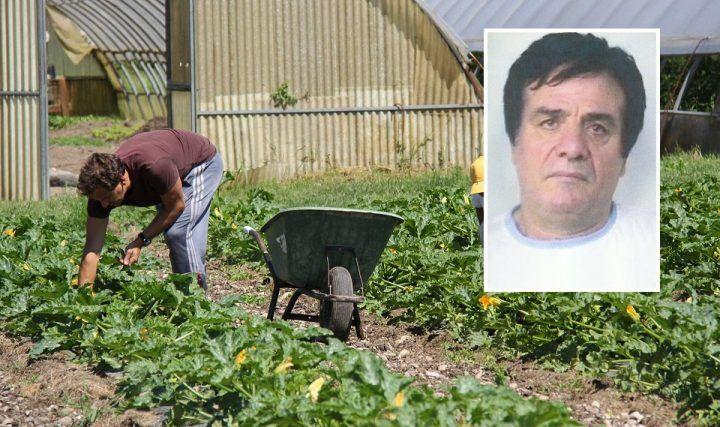 """Camorra, lavori forzati in colonia agricola per il boss Nicola Zara: """"E' pericoloso"""""""