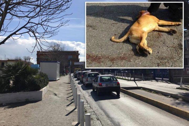 Giugliano, autobus investe e uccide cane. La padrona scoppia in lacrime