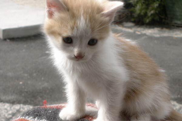 Finge di adottare gatti, li ammazza e pubblica le foto: condannato