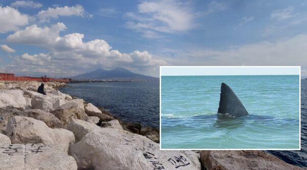 Napoli, ritrovato squalo morto in mare