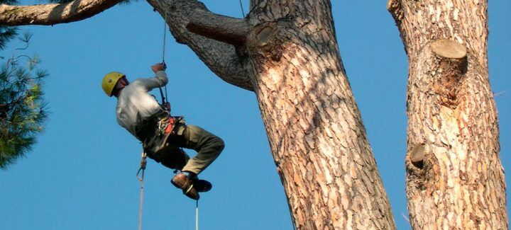 Tragedia a Morcone, uomo cade un albero e muore