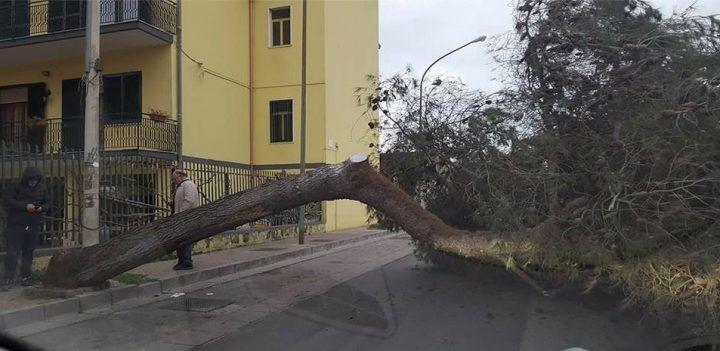 Tragedia sfiorata a Villaricca, crolla un albero