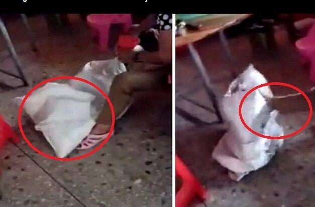 Bimba chiusa in un sacco e torturata dalla nonna, IL VIDEO