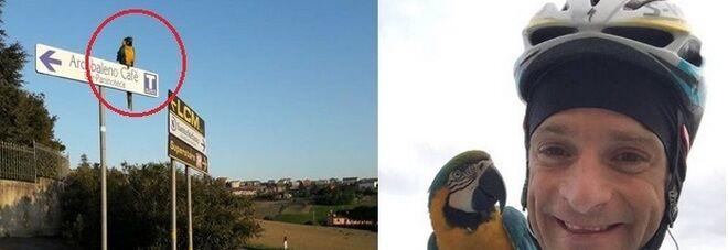 Scarponi muore, Frankie il pappagallo resta ad aspettarlo sul luogo dell'incidente