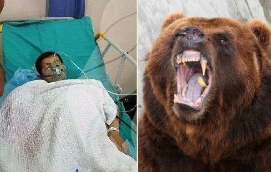 Orso attacca bimbo allo zoo: braccio sbranato