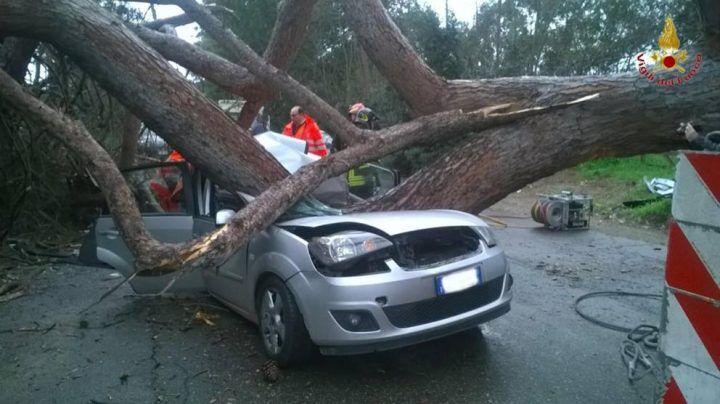 Drammatico incidente nel Cilento: 52enne muore schiacciato da un albero