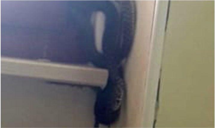Pianura, va in bagno e trova un serpente attaccato alla finestra